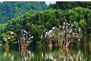 Báo động tình trạng đa dạng sinh học Việt Nam vẫn trên đà suy giảm và suy thoái