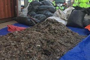 Gần 5,3 tấn vảy tê tê ngụy trang trong container hạt điều