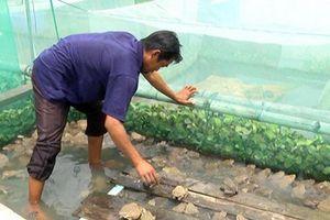 Nuôi ếch xen cá: Giảm chi phí, hiệu quả cao