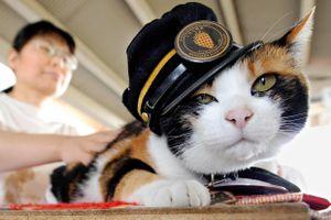 Những cô mèo cứu tuyến đường sắt thoát cảnh đóng cửa ở Nhật