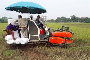 Doanh nghiệp Việt bắt tay trồng lúa Nhật hữu cơ