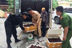 Bắt giữ gần 50kg tôm hùm đất nhập lậu từ Trung Quốc