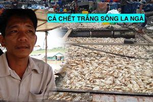 Bất lực nhìn cá chết trắng sông La Ngà, dân lâm vào thảm kịch nợ nần