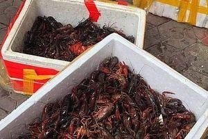 Lạng Sơn: Bắt giữ gần 50 kg tôm càng đỏ nhập lậu