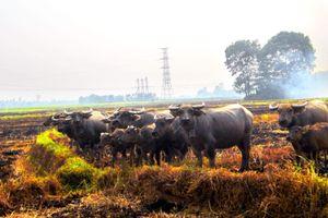 Cánh đồng ơi cánh đồng… n Tản văn của Nhụy Nguyên