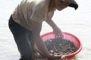 Dân cả vùng đổ về hồ Ea Kao bắt con nấu ra nước ngọt lừ