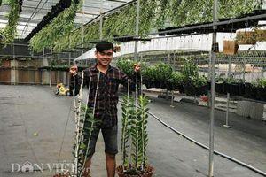 15 tuổi 'tảo hôn' với lan, 22 tuổi chàng trai có vườn lan hàng tỷ đồng