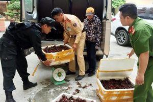 Bắt giữ gần 50kg tôm hùm đất nhập lậu tại khu vực Cửa khẩu Hữu Nghị