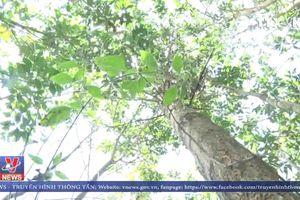 Người dân Kon Plông (Kon Tum) mòn mỏi chờ đền bù