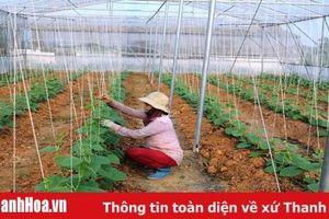 Huyện Đông Sơn có 17/19 HTX thực hiện liên kết tiêu thụ sản phẩm
