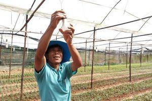 Lâm Đồng: Hỗ trợ bóng đèn LED, sáng nhà lồng trồng hoa