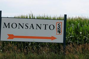Lĩnh án vì sản xuất thuốc diệt cỏ gây ung thư