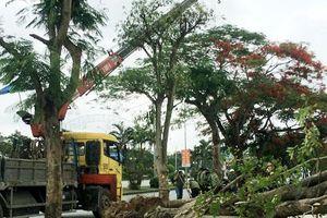 Hải Phòng: Vụ chặt hạ cây đã được trồng lại
