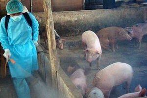 Kết quả mẫu xét nghiệm đàn lợn trôi trên kênh dẫn nước ở Hà Tĩnh