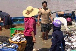 Chính thức xác định nguyên nhân 1.000 tấn cá bè chết trắng sông La Ngà