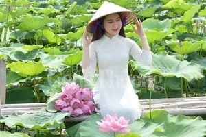 Ngọt ngào sắc hương sen Hồ Tây Hà Nội