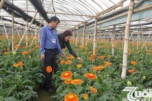 Hà Nội có 3 xã đầu tiên về đích nông thôn mới nâng cao