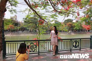Thiếu nữ Hà thành tạo dáng bên hoa phượng đỏ Hải Phòng