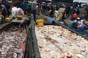 1.000 tấn cá bè chết trắng ở Đồng Nai do sốc khí
