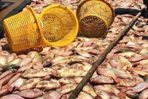 Phó Thủ tướng yêu cầu xác định nguyên nhân cá sông La Ngà chết