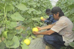 Nông dân sản xuất hàng hóa phục vụ đô thị