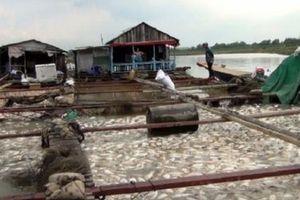 Đồng Nai: Gần 1.000 tấn cá bè chết trắng trên sông La Ngà là do rác thải, ô nhiễm nguồn nước