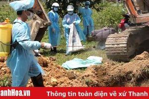 Huyện Như Xuân: Xuất hiện dịch tả lợn Châu Phi tại 2 xã Bình Lương và Cát Vân