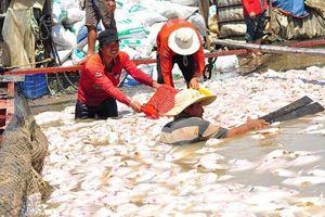 1.000 tấn cá chết trắng sông La Ngà: Phó Thủ tướng yêu cầu xác định nguyên nhân