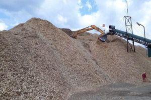 Hệ lụy từ chế biến, xuất khẩu dăm gỗ