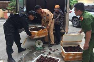 Phát hiện ô tô chở tôm hùm đất - sinh vật ngoại lai cấm nhập vào Việt Nam