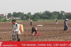 Vùng ngoài đê Đức Thọ trồng lạc trái vụ, thu gấp 4 lần đậu xanh truyền thống