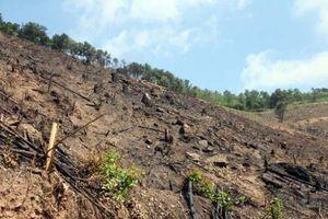 Cty lâm nghiệp Đông Triều: Buông lỏng quản lý rừng, đội trưởng đội lâm nghiệp bị cách chức