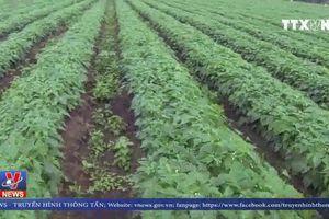 Pháp cấm thuốc bảo vệ thực vật chứa Epoxiconazole