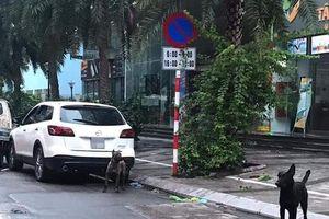 Hà Nội: Phạt chủ nhân đàn chó dữ thả rông 700 nghìn đồng