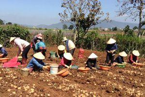 Nông nghiệp phát triển tích cực dù nhiều thách thức
