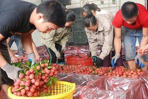 Các bộ, ngành, địa phương hỗ trợ xuất khẩu vải thiều