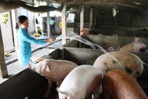 Bạc Liêu quyết liệt phòng chống dịch tả lợn châu Phi