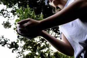 Philippines chỉ cho phép học sinh tốt nghiệp khi trồng ít nhất 10 cây xanh