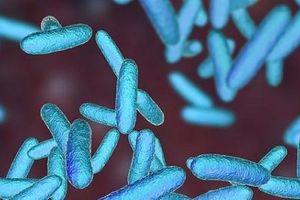 Phát hiện hợp chất có thể đối phó với tình trạng kháng thuốc kháng sinh