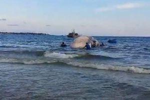 Xác cá voi khổng lồ trôi dạt trên biển Mũi Né