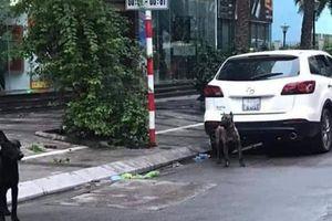 Để chó ra đường không rọ mõm, chủ bị phạt 700.000 đồng