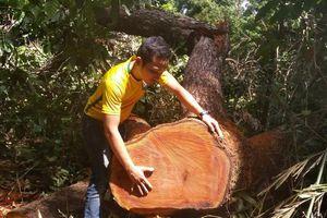 Gia Lai: 220 vụ vi phạm Luật Bảo vệ và Phát triển rừng trong 5 tháng đầu năm 2019