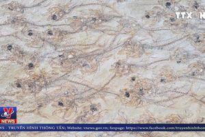 Hóa thạch 50 triệu năm đàn cá cổ đại gần 300 con