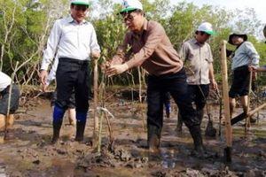Bạc Liêu: Cả trăm người lội sình trồng cây mắm ở phường ven biển