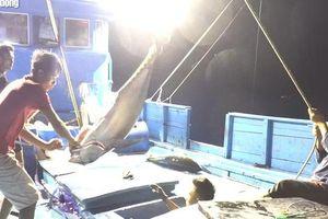 Một triệu lá cờ Tổ quốc cùng ngư dân bám biển: 'Cuộc chiến' với cá ngừ đại dương