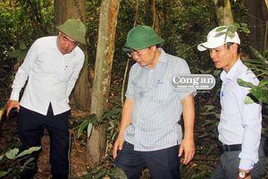 Khám phá rừng ba kích tự nhiên lớn nhất Quảng Nam