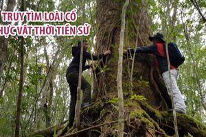 Truy tìm loài cổ thực vật thời tiền sử trong rừng Bidoup