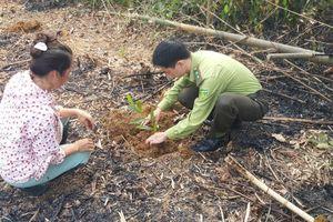 Tuyên Quang: Chiêm Hóa triển khai trồng rừng