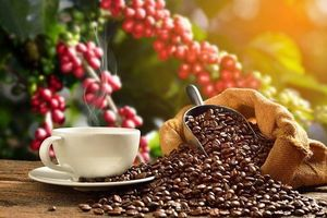 Trung Quốc giảm nhập khẩu cà phê từ Việt Nam