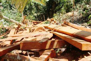 Quảng Nam: Xâm hại rừng có dấu hiệu gia tăng